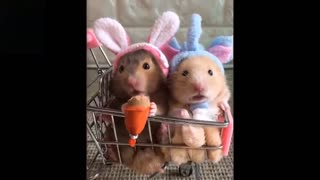 😂Crazy And Funny Pets 😂I can't believe my eyes n.1