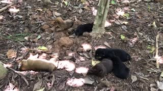 Puppies in the wild playing