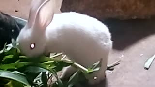funniest - funny and cute animals