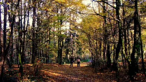 Tourists walk through the forest in autumn