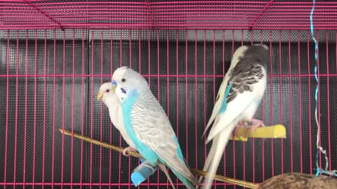 Bird is nice