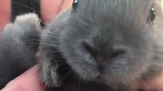 Baby Bunny Wiggles Nose