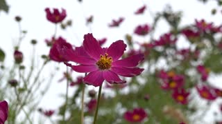 Beautiful flowers in autumn 7
