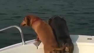 Happy dog can't resist the boading day - Funny pet video