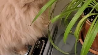 Cat Can't Quite Snag Snack