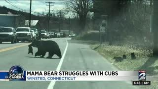 Viral Video Mama bear struggles with cubs