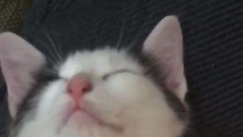 Cat sleeping head down