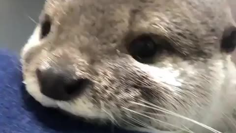 What you otter do