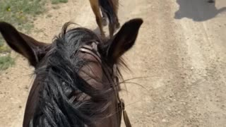 Just riding horses