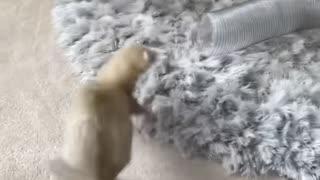 Ferret Friends Having Fun