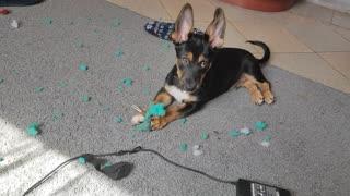 Puppy loves sponges