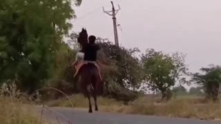 Horse walking on two legs