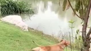 When animal am alone