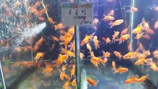 Beautiful Fish Sale in the market