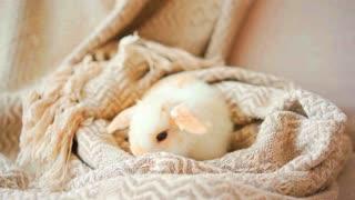 Cute Baby Bunny Will Melt Your Heart!