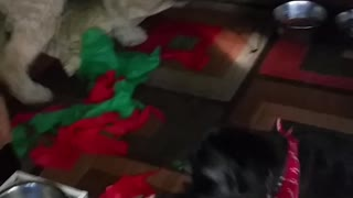 Dogs Love Christmas