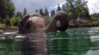 Watch the beautiful fun elephant
