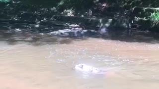 Dog leaps into water
