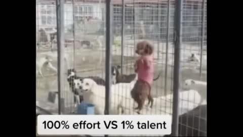 Top Dog Race