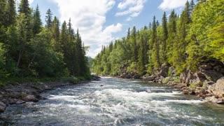 15 Beautiful Nature Stock Footage Royalty