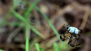 Grasshopper And Spider 4k