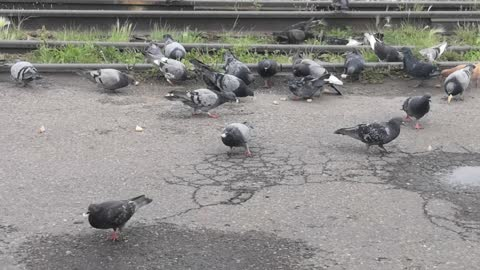 Birds from the hungry land.