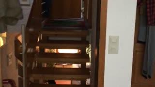 Little white dog upstairs staring in through door crack
