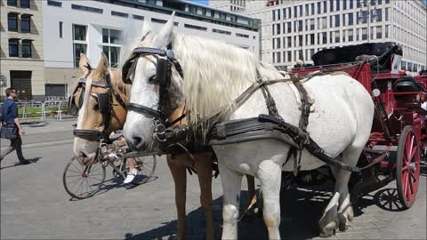 Two Couple Horses Carrying Carriage For Tourism Transport