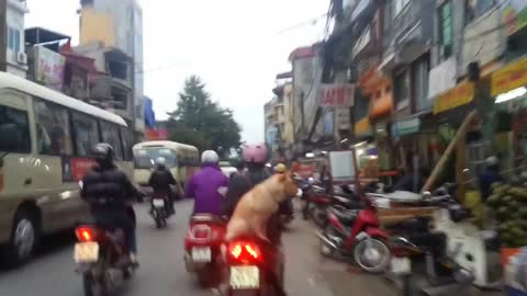 """The dog out for a ride on a Motobycle in the sidecar. It does not Equipped with """"Doggles"""""""