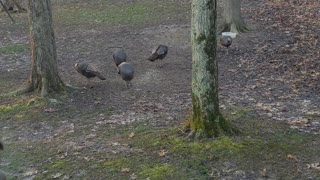 Spring Turkey Gathering