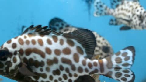 💗Under water animal Marine fish #14💗