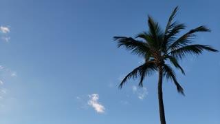 Palm Trees, Beach - Palm Beach, FL