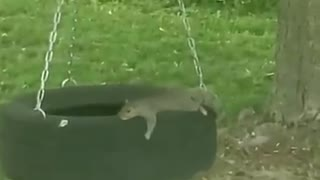 Funny clips group playing people with animals