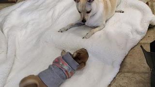 Puppies at play.mp4