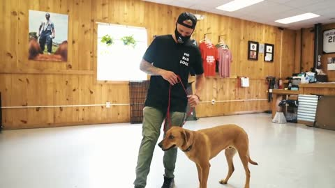 One of the Biggest Mistakes in Dog Training