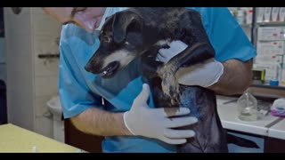 Dog with Tumor and Her Puppies get Rescued