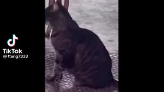Crazy dog dance