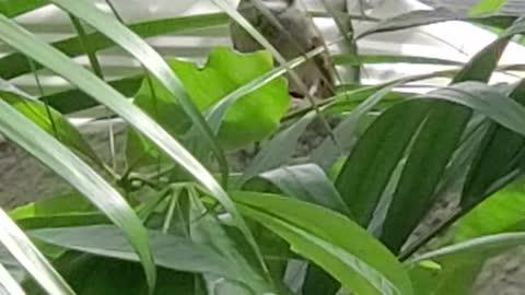 Sparrow Bird Hiding In The Tree