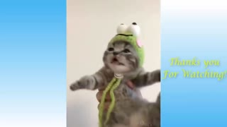 Funny Cats Just Being Themselves