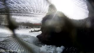 Dog Saved From Ice Floe After 2 Months Waiting For Owner 03