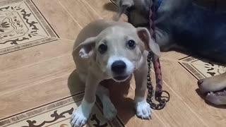Puppy being a puppy