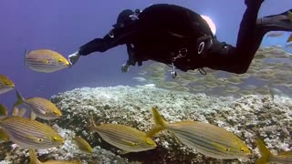 Scuba diving into the ocean around fishes