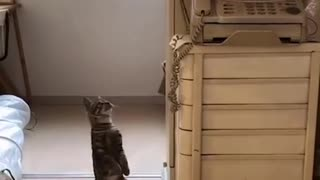 Kitten: I was shocked at that time!