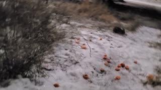 Rabbit Winter Journey Day 3