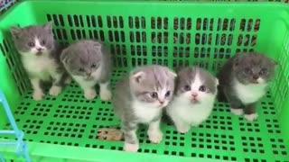 5 Curious Little Kittens