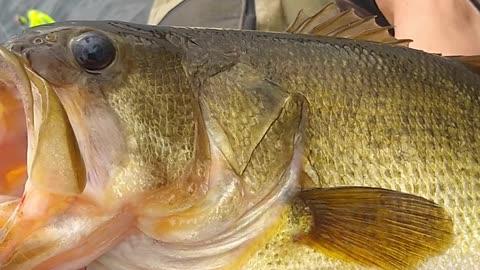 Fishing for largemouth bass