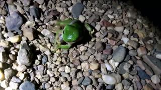 Frog Vs. Snake