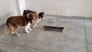 Two Cute Dogs with a Skateboard