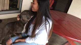 Adorably Jealous Dog Won't Let Owner Near His Girlfriend