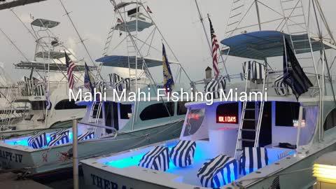 Mahi Mahi Fishing in Miami